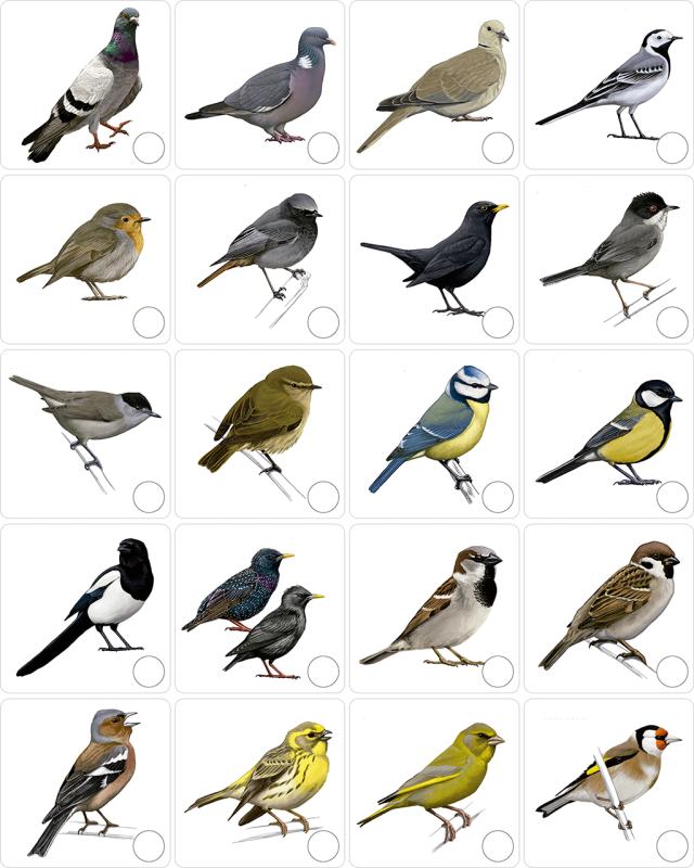 ocells_fitxa_mdp sense noms
